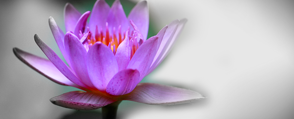 Vipassana Meditation