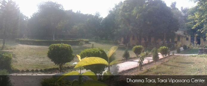 Dhamma Tarai